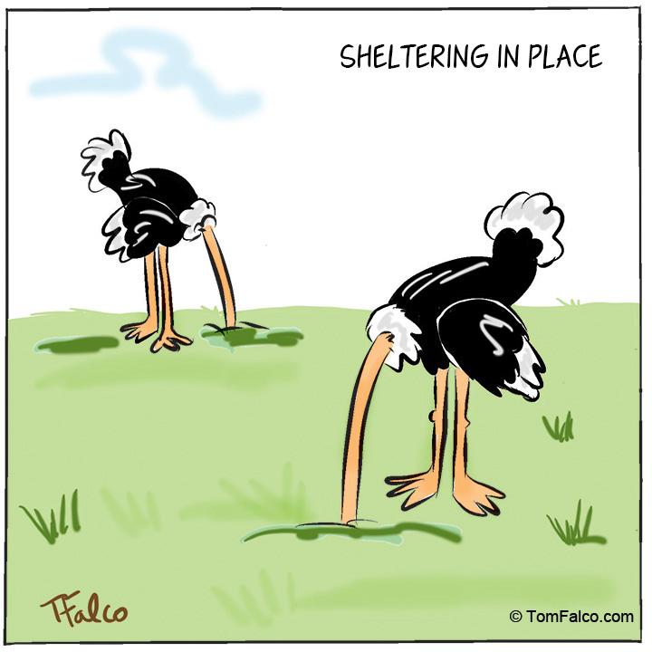 ostriches-print